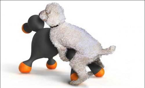 Le premier sextoy pour chien